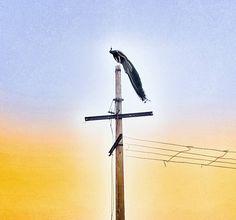 #orignals #peacock shot by #redmi #note #4 #MobilePhotographersWorld