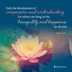 Only the development of compassion and understanding for others can bring us the tranquility and happiness we all seek.