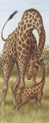 Mama Giraffe with Baby Art Print Ron Jenkins
