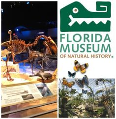 2 Admission Tickets to the can't miss Florida Museum of Natural History's  BUTTERFLY RAINFOREST living exhibit that features hundreds of free-flying butterflies and birds from around the world along with an assortment of other animals including turtles and fish.