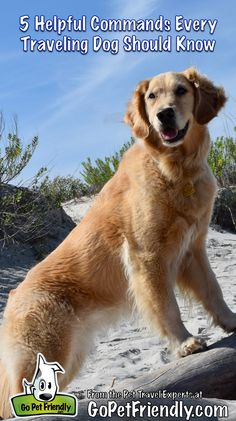 5 Helpful Commands Every Traveling Dog Should Know | GoPetFriendly.com #pettravel #dogtraining