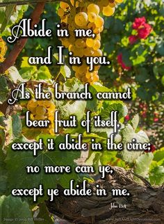 Abide in me and I in you. As the branch cannot bear fruit of itself except it abide in the vine; no more can ye except ye abide in me. 5 I am the vine ye are the branches: He that abideth in me and I in him the same bringeth forth much fruit: for without me ye can do nothing. 6 If a man abide not in me he is cast forth as a branch and is withered; and men gather them and cast them into the fire and they are burned. 7 If ye abide in me and my words abide in you ye shall ask what ye will and…