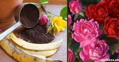 Valentines Day Cakes, Home And Garden, Pudding, Banana, Desserts, Plants, Food, Balcony, Landscaping