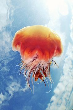 semenov-jellyfish-against-sky1