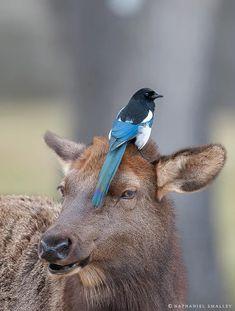 66 ideas for cute bird art bluebirds Nature Animals, Animals And Pets, Funny Animals, Cute Animals, Cute Birds, Small Birds, Beautiful Birds, Animals Beautiful, Pie Bavarde