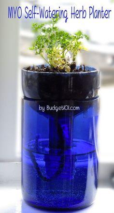 It would be a kitchen window herb garden!- MYO Glass Self Watering Planter |