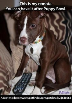 Repin this adorable adoptable pup so he can watch Puppy Bowl IX in his forever home!