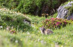Randonnée en Vanoise : carnet de voyage photo