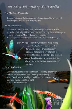 Dragonfly Digital Art - Magic And Mystery Of Dragonflies by Lisa Redfern Dragonfly Meaning Spiritual, Dragonfly Symbolism, Dragonfly Quotes, Dragonfly Tattoo Design, Spiritual Meaning, Dragonfly Art, Dragonfly Images, Tattoo Designs, Dragonfly Necklace