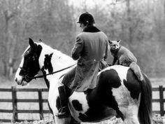 fox hunting: you're doin' it right
