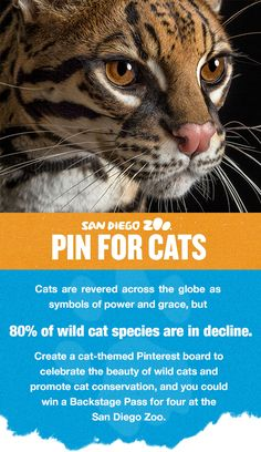 Pin for cats for a chance to win a Backstage Pass for four!