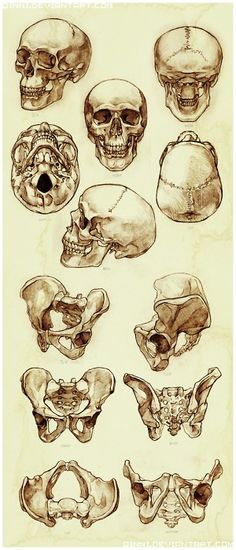 If only I could have produced this kind of amazingness for my physical anthropology professor...