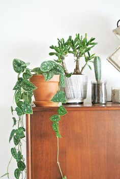 Indoor plants. Draping plants, great for hanging in a macrame hanger.