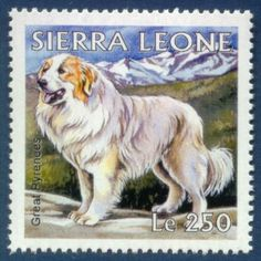 Great Pyrenees Dog Drawing The Pyrenean Mountain Dog, known as the Great Pyrenees in North America, is a large breed of dog used as a livestock guardian dog.Postage Stamp Sierra Leone