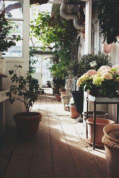 Floral walkway.