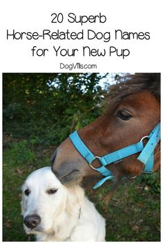 20 Superb Horse Related Dog Names For Your New Pup With Images