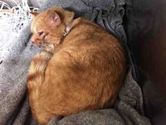URGENT – NEEDS IMMEDIATE PLACEMENT OR WILL BE EUTHANIZED!! OLLIE IS INJURED