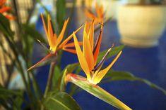 Five fuss-free plants
