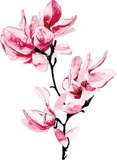 Sakura watercolor painting style illustrations - sample of cherry