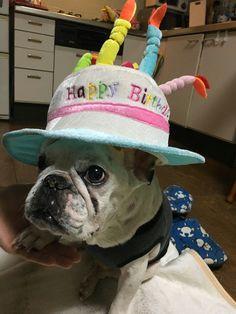 Happybirthday my cute French dog
