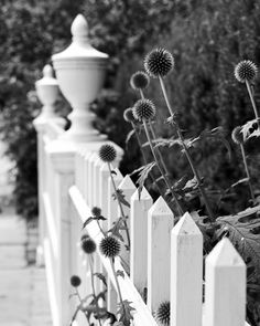White Picket Fence with Summer Flowers