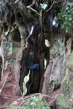 Climbing the Castle Tree! by Chill Expeditions, via Flickr