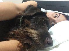 When you know you gotta go to the Vet today but you'd rather stay in bed  #walkwithgus #dogsofinstagram #dogoftheday #mondayblues #sleepydog #beardeddog #beardlife #cutedog #chocolatelabradoodle #vettrip #rabiesvaccine #shotshotshot #dontwanttoge