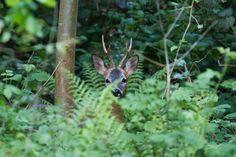Jungle deer by lilian-lemonnier on 500px