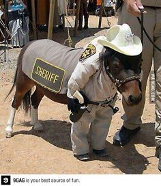 A deputized miniature horse in uniform.  Your argument is invalid.