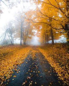 """Autumn road (Windsor, Massachusetts) by Huck (@kylefinndempsey) on Instagram: """"Fall fog in full effect."""" cr.c."""
