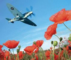 """flying-by-instruments: """" Supermarine Spitfire MK IX """" Spitfire over poppies Aircraft Photos, Ww2 Aircraft, Fighter Aircraft, Military Aircraft, Alice In Wonderland Steampunk, Armistice Day, Poppies Tattoo, The Spitfires, Supermarine Spitfire"""