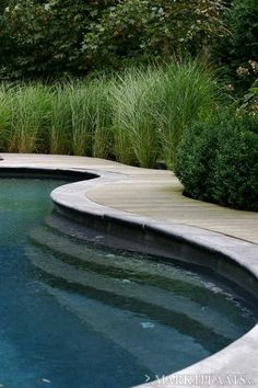 Many ornamental grasses adapt beautifully to placement by a swimming pool!.