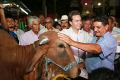 As part of the start of the International Fair of Tapachula 2014 to deliver 100 cattle ranchers stallions for this traditional activity in Chiapas raise its quality and increase its production