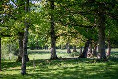 Domaine des Etangs - Forêt Limousine #massignac #france #nature #forest