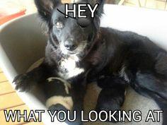 Dog woof