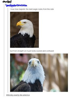 America is seriously not afraid to be stupid! Like every other country is here like geniuses and we are here like, like that bald eagle!