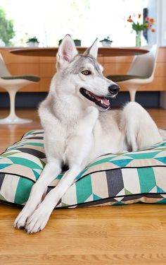 Your pooch will happily snuggle up to sleep soundly in the maximum comfort of the Premium Cotton Rectangle Pillow Bed.