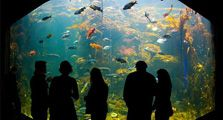 Things to do in San Francisco - NightLife at the California Academy of Sciences