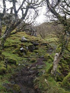 Fangorn Forest - Isle of Skye, Scotland
