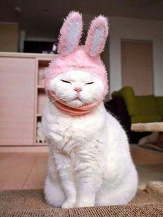 Disfrazado de conejo