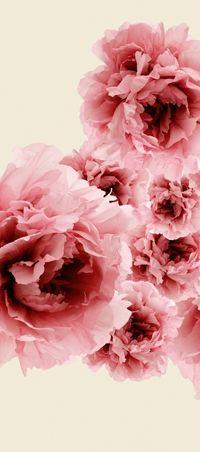 Bloom02 - Wall & Decò - Carte da parati per l'arredo contemporaneo
