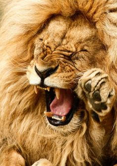 God's not dead he's surely alive! He's living on the inside roaring like a lion!