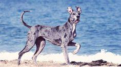 The Most Active Dog Breeds | PetCareRx
