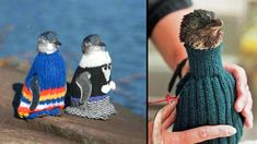Penguins in sweaters. If you know how to knit, make a a penguin a sweater. The sweaters help oil-spill penguins keep warm while they wait to be cleaned and keeps them from poisoning themselves. How freakin' cute! Save The Penguin, Penguin Pictures, Cool Sweaters, Knit Sweaters, Yarn Store, Textiles, Keep Warm, Knitting Projects, Knitting Ideas