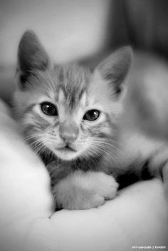 Cute Kitty!!
