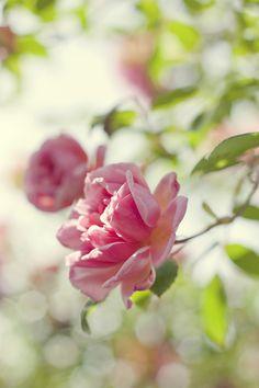 Secret Garden ♡༻ ☆༺❀ .•` ✿⊱ ♡༻ ღ☀•` ✿⊱╮ ♡ ❊ ** ❊ ✿⊱╮