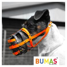 Buy the best custom-made dog muzzle from BUMAS. A custom muzzle is the best muzzle for your canine or beloved pet. These colourful and comfortable best fit muzzles are made from BioThane - original BUMAS are animal welfare certificated. Dog Muzzle, Dog Days, Dog Love, Pet Dogs, Your Dog, Pointer Dog, 81, Puppies, German