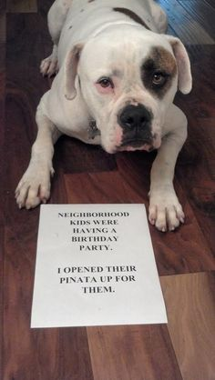 """""""Neighborhood kids were having a Birthday Party. I opened the piñata for them."""" ~ Dog Shaming party pooper - The best of dog shaming - Part 12 