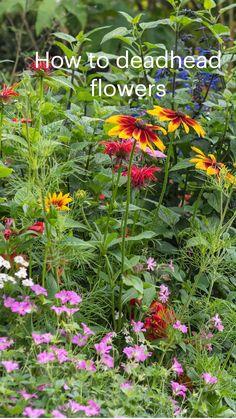 Garden Border Plants, Garden Borders, Garlic Companion Plants, Deadheading Flowers, Phlox Plant, Herbaceous Border, Winter Plants, Annual Flowers, Backyard Farming