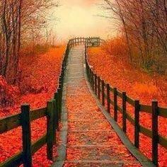 Fall favorite